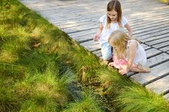 Two adorable young girls catching babyfrogs in summer forest royalty free stock photo