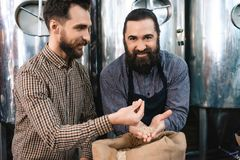 Two adult bearded men check quality of barley malt while in brewery. Process of beer manufacturing. Brewing. Brewery. Beer crafting Stock Images