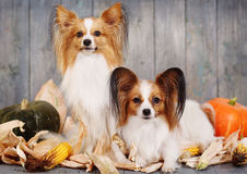 Two adult dogs Royalty Free Stock Image