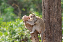 Two affectionate monkeys sitting on tree, hugging each other Stock Image