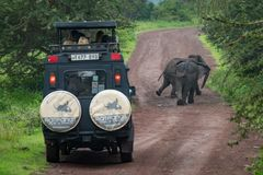 Two African elephant in front of jeep Royalty Free Stock Images