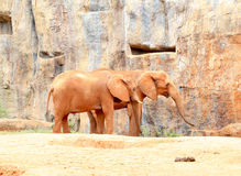 Two African elephant standing on sandy soil Royalty Free Stock Images