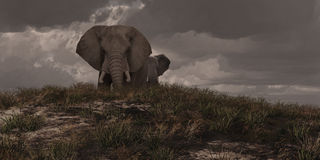 Two African Elephants. African elephants on the grasslands of Kenya vector illustration