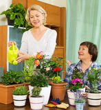 Two aged housewifes taking care of domestic plants. In pots Stock Image