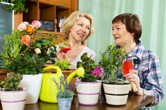 Two aged women taking care of decorative plants. In pots Stock Photography