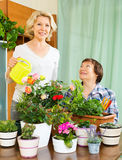 Two aged women taking care of domestic plants Stock Photo