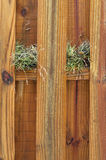 Two air plants growing on wooden fence Royalty Free Stock Photography