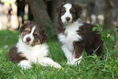Two amazing puppies lying together in the grass Royalty Free Stock Image