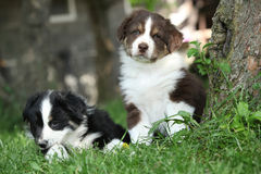 Two amazing puppies lying together in the grass Royalty Free Stock Photos