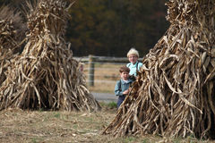 Two Amish boys playing by corn shocks Royalty Free Stock Photos