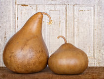 Two amish gourds sitting on wood plank Stock Photo