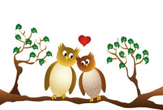 Two amorous owl sitting on a branch, white background Royalty Free Stock Image