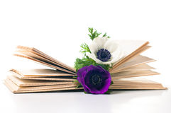 Two anemone flowers in an old book Royalty Free Stock Photos