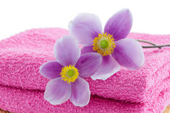 Two anemones on towels Stock Photos