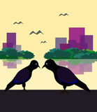 Two Angry Birds. Two black birds sitting by the lake and look hostile to each other Royalty Free Stock Images