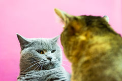 Two angry cats Stock Images