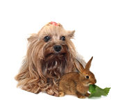 Two animals Royalty Free Stock Image
