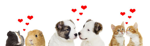 Two animals. A two animals, valentines day Royalty Free Stock Image