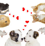 Two animals, valentines day. A two animals, valentines day Royalty Free Stock Image
