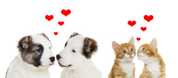 Two animals, valentines day. On a white background Royalty Free Stock Images