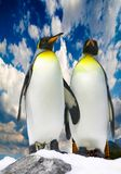 Two antarctic penguins Stock Image