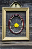 Two antique picture frames on wooden wall and flower Royalty Free Stock Photo