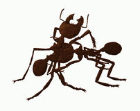 Two ants. Two big warrior ants fighting Royalty Free Stock Photography