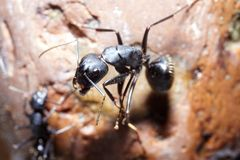 Two ants conspiracy. On rock royalty free stock photography