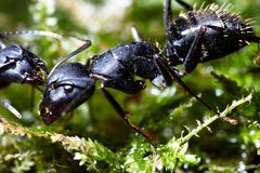 Two ants conspiracy on grass Royalty Free Stock Image