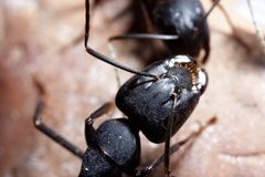 Two ants conspiracy. Two ants consulting on rock Stock Image