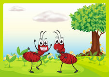 Two ants in nature Royalty Free Stock Images