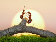 Two ants on sunset royalty free stock image