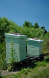 Two Apiaries for Beekeeping. Two light green apiaries for beekeeping, amongst foliage stock photo