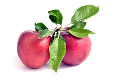 Two apple Stock Photography