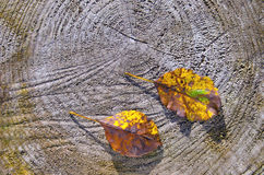 Two apple tree leaves on wooden background Stock Photos