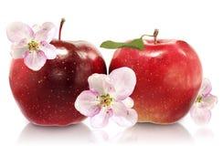 Two apples closeup Stock Photos