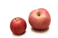 Two apples of different sizes Royalty Free Stock Photo