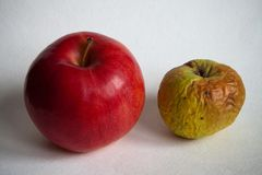 Two apples. Fresh and rotting-inedible Stock Images
