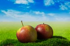 Two apples on the green meadow. Two fruits on the green grass Royalty Free Stock Images