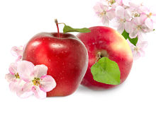 Two apples isolate Stock Images