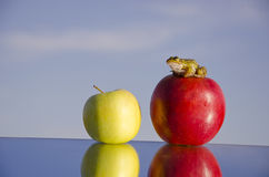Two apples on mirror and green frog Royalty Free Stock Photo