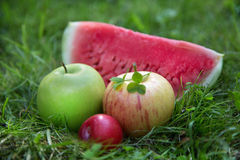Two apples with plums and watermelon. Slice royalty free stock image
