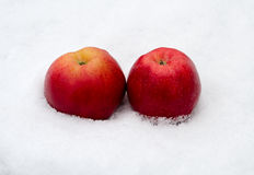 Two apples on snow Royalty Free Stock Images