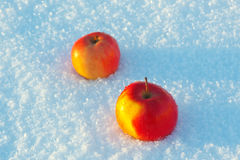 Two apples in the snow Stock Photos