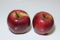 Two apples in a white background stock photography
