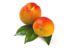 Two Apricot Stock Photography