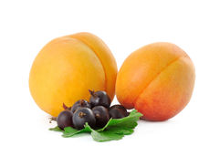 Two apricot and currant Royalty Free Stock Photo