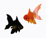 Two aquarium fish. Two golden fish variations on white background Vector Illustration