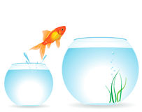 Two aquariums and fish. The gold fish jumps out of an aquarium Royalty Free Stock Photos