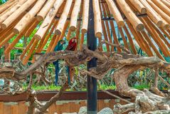 Two Ara parrots, in the shade of a wooden porch. On a sunny day royalty free stock images